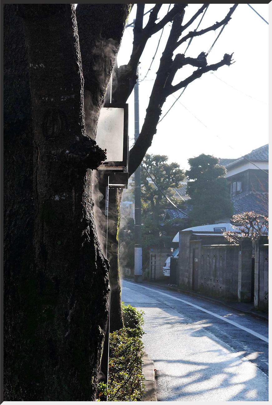 yugemoku_150206_02.jpg